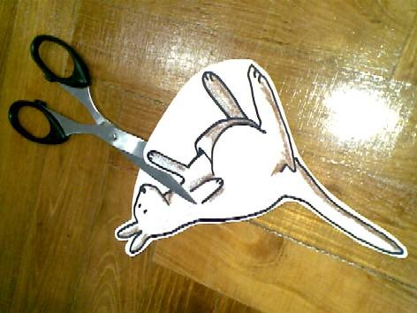 K - kangaroo