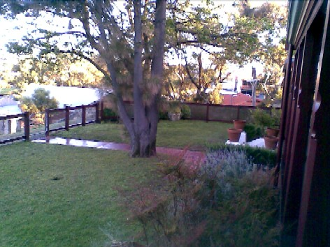 Garden in our Freo cottage