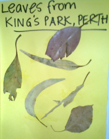 Scrapbook-Kings Park