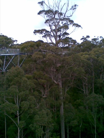 At its highest point, the treetops walk is 40 metres above the ground.